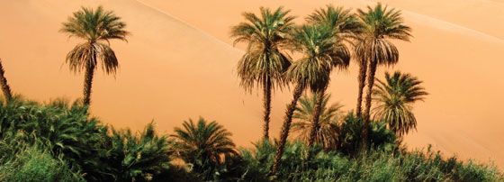 image of palm trees in desert